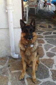 Eros - My father's dog
