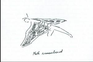 moth remembered